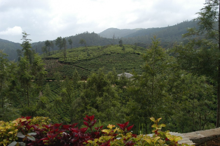 Pedro Tea Estate, Nuwara Eliya, Sri Lanka